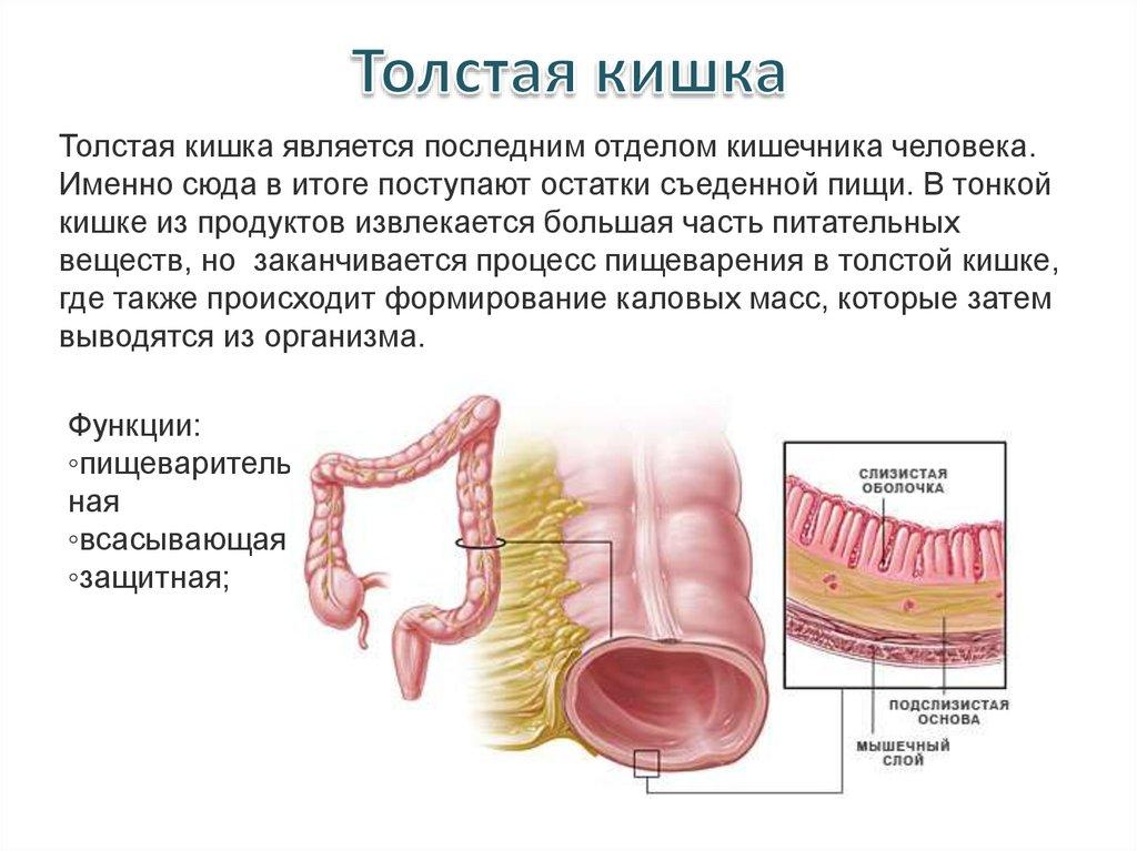 Заболевание или иное расстройство жизнедеятельности организма возникшее вследствие попадания в организм яда или токсина называется