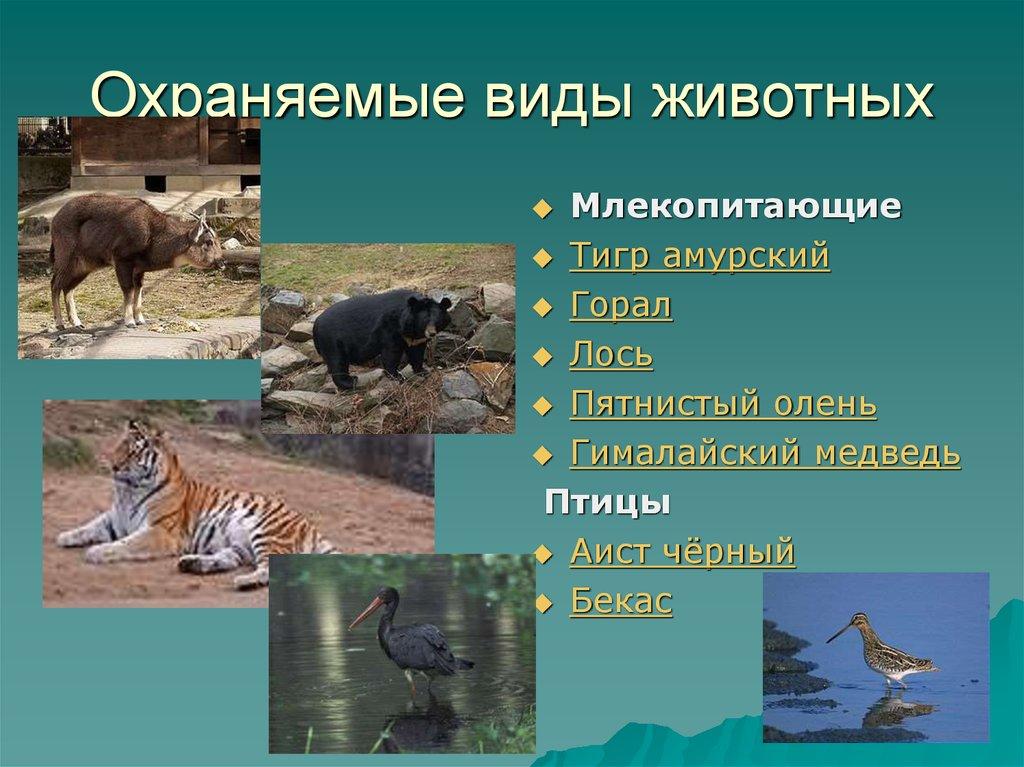 может картинка охраняемые животные этот
