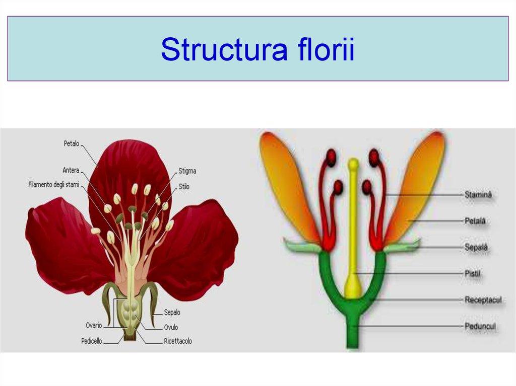 Slide Structura Plante