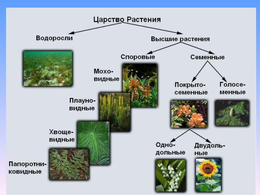 растений гдз царство