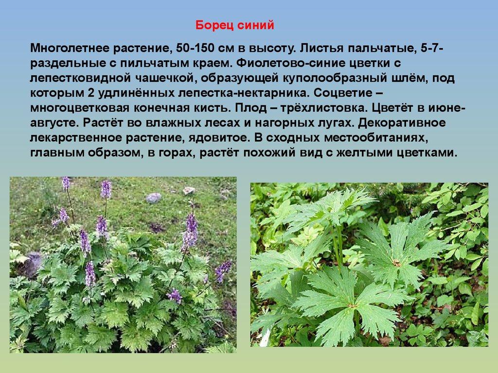 Доклад про растения леса 5443