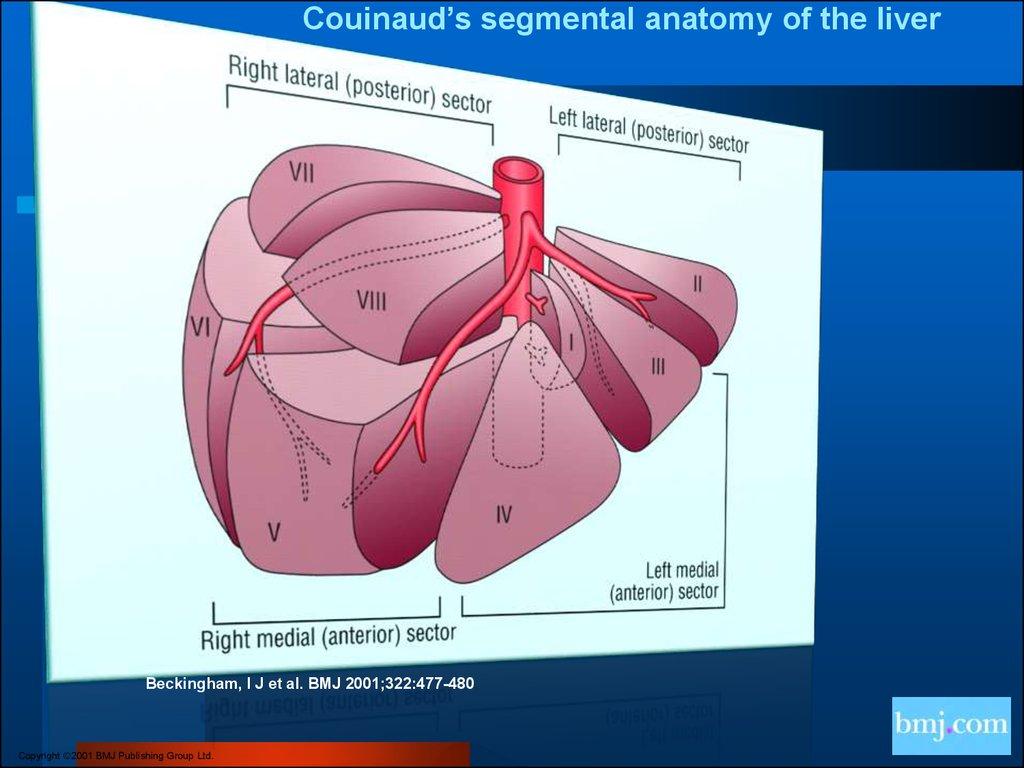 Blood Supply Online Presentation