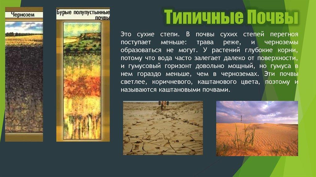 Транзитные почвы и их растительность