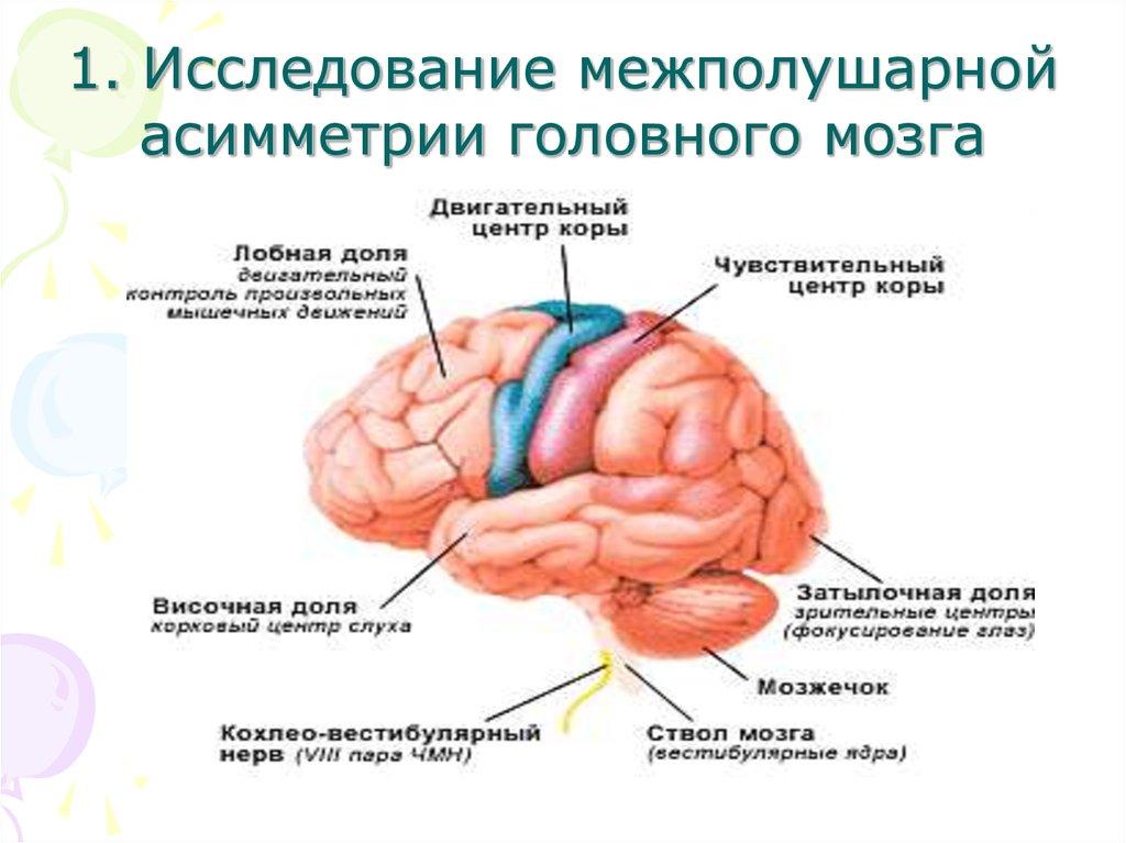пельмени липома левой части головного мозга сайт или зарегистрируйтесь