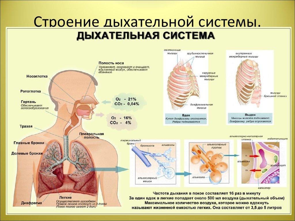 читы Варфейс системы органов во сне Продам полноценную