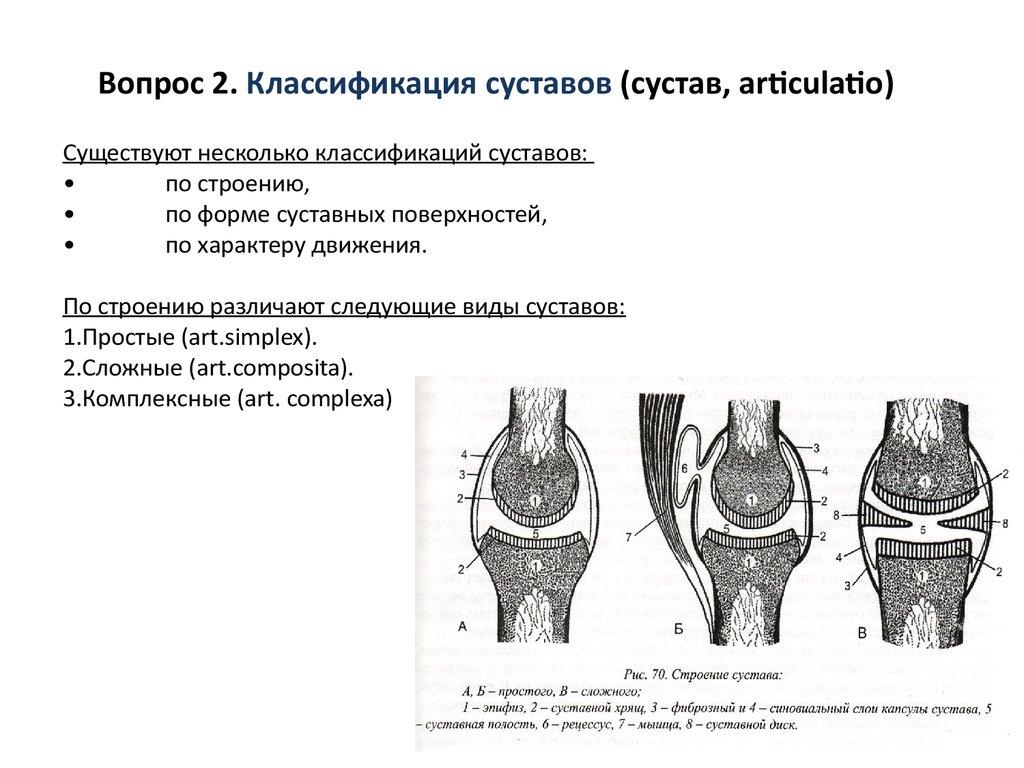 Тип сустава 1а вывих сустава задней лапы щенка