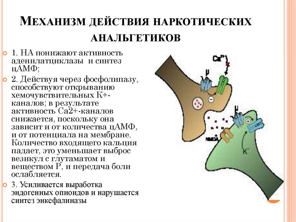 Механизм действия анальгетик