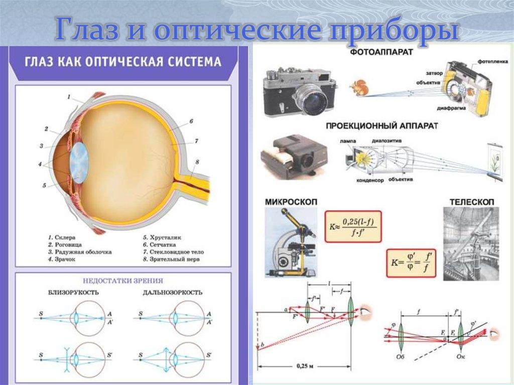 оформления оптика фотоаппарата физика сорта беллароз описание