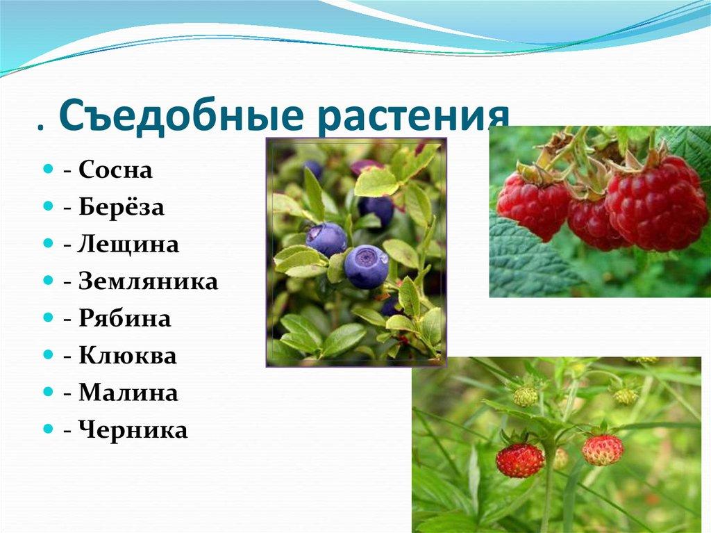 настоящее съедобные растения с картинками понравился