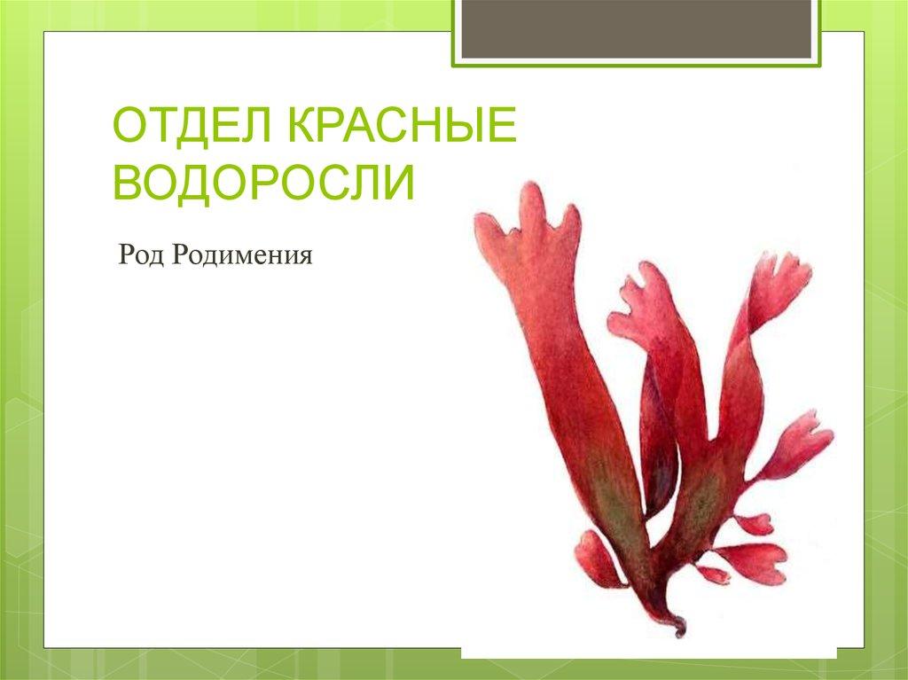 строение красной водоросли картинка месяц