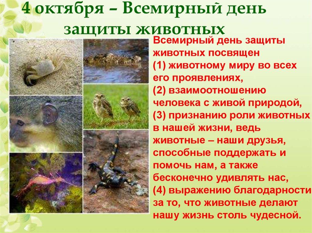 презентация вымирающие виды животных на английском