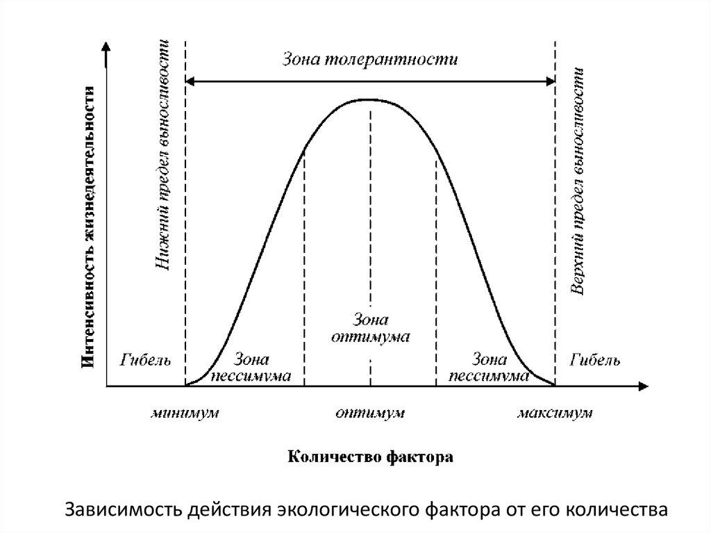 Влияние экологических факторов на сперматогенез