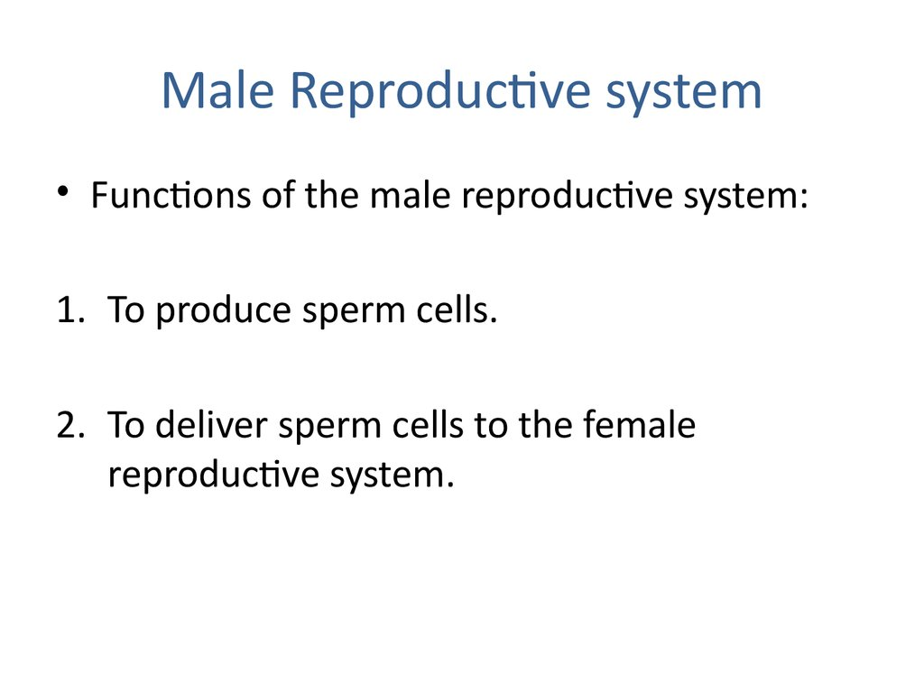Male Reproductive System Online Presentation