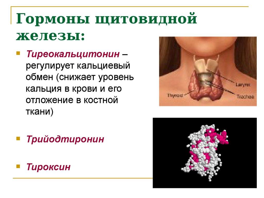 Гормоны щитовидной железы головокружение
