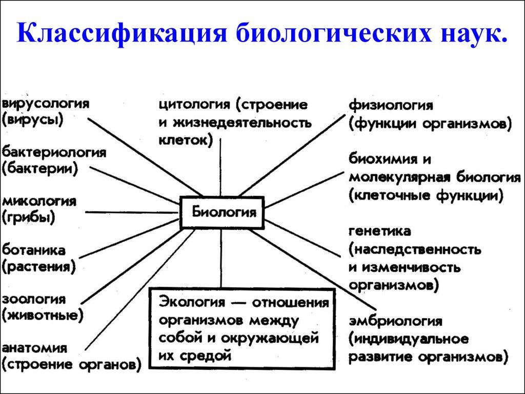 Картинки по запросу биологическая классификация картинки