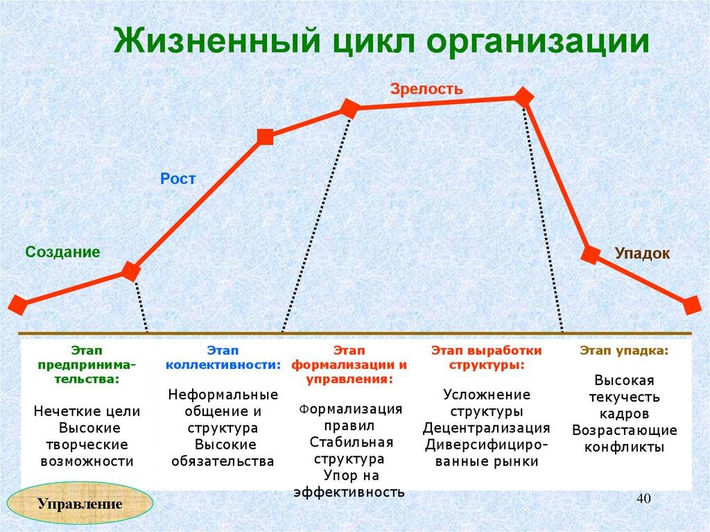 жизненного бизнеса схема цикла