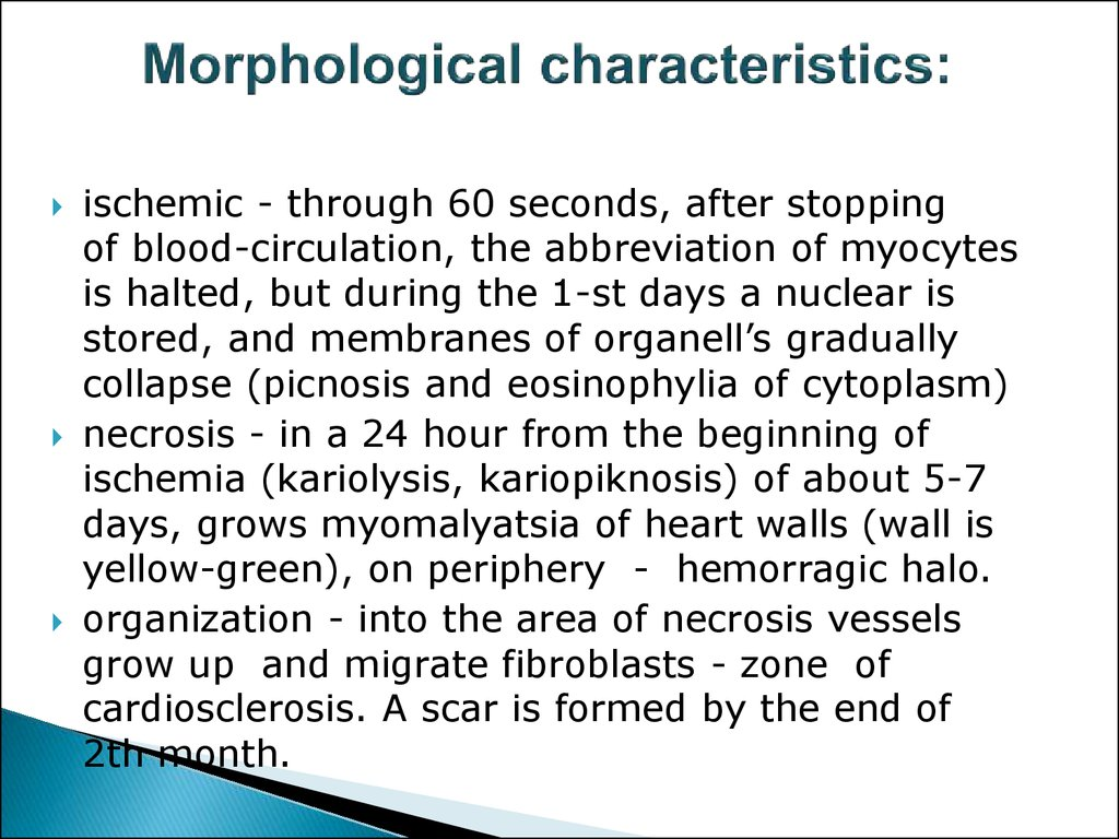 Morphological characteristics: