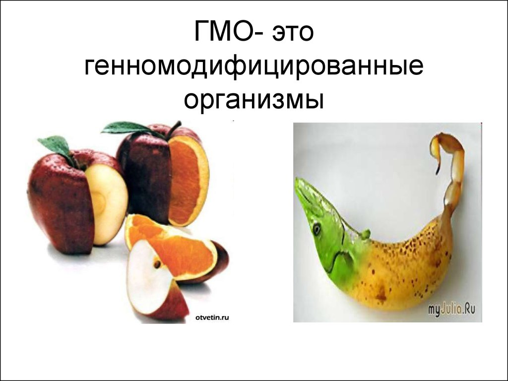 gmos What's a gmo a gmo (genetically modified organism) is a laboratory process of taking genes from one species and inserting them into another in an attempt to obtain a desired trait or characteristic.