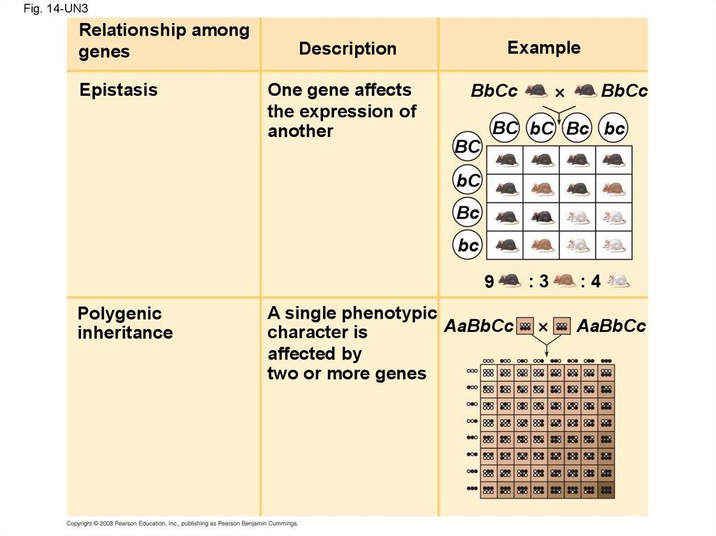 Mendel and the Gene Idea - презентация онлайн