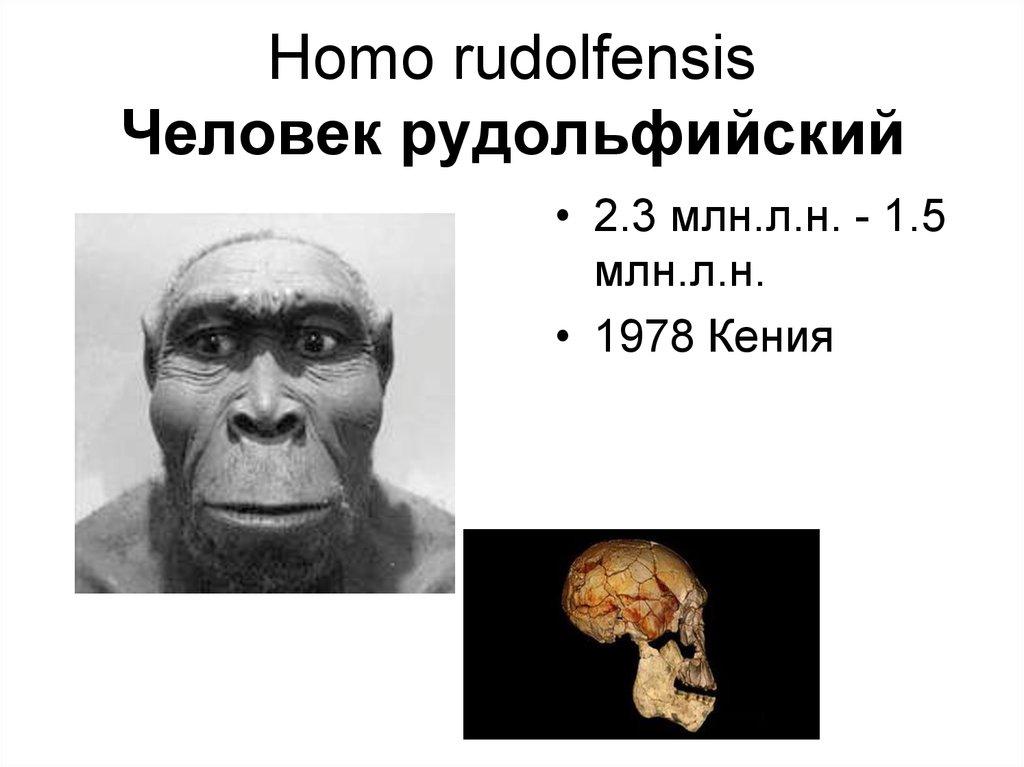 homo suburiensis paper