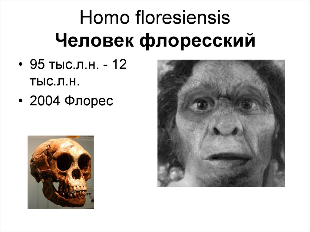 homo floresiensis essay The hobbit of flores island essay:: 4 works cited the 426 cc brain capacity led scientists to taxa the skeleton to a new species they called homo floresiensis.