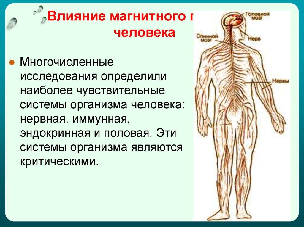 Реферат влияние электромагнитных полей на здоровье человека 2961