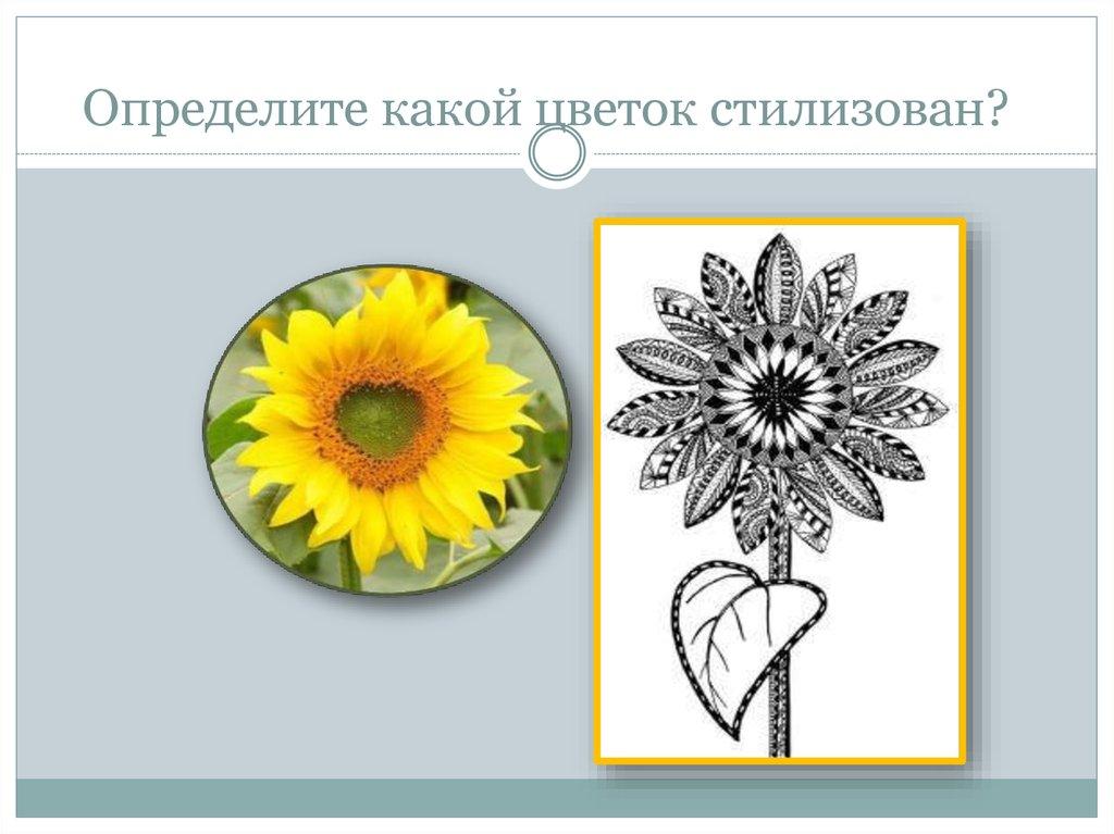 Какой цветок ирины