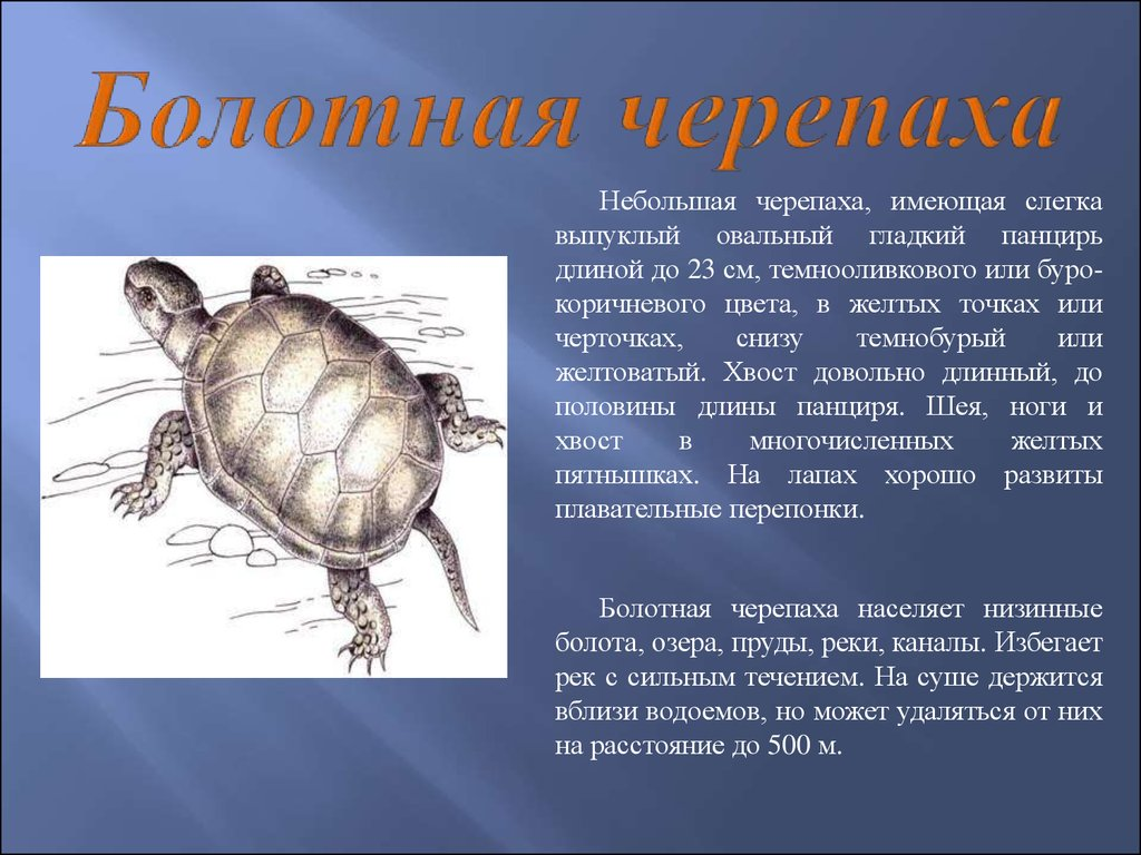 Доклад животные и растения занесенные в красную книгу 8863