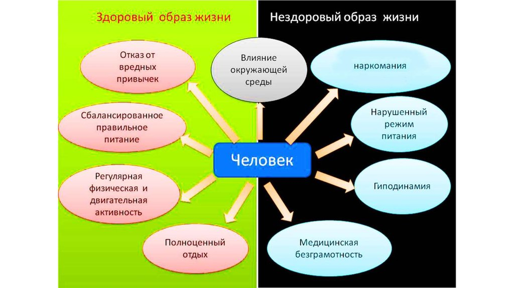 Здоровый образ жизни цикл