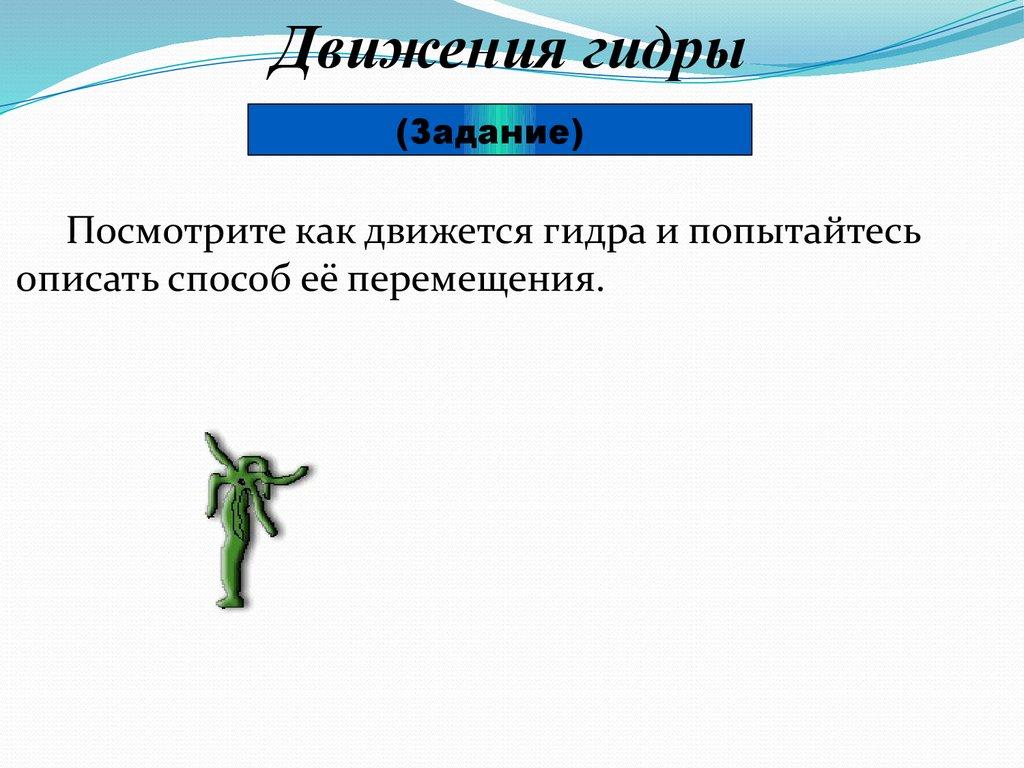 торрент через tor browser gidra