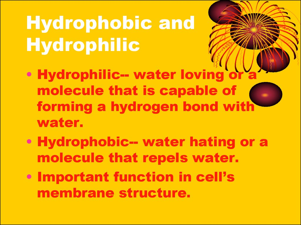 Hydrophobic and Hydrophilic