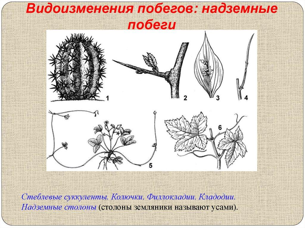 Презентация Биология 6 Класс Внешнее Строение Листа