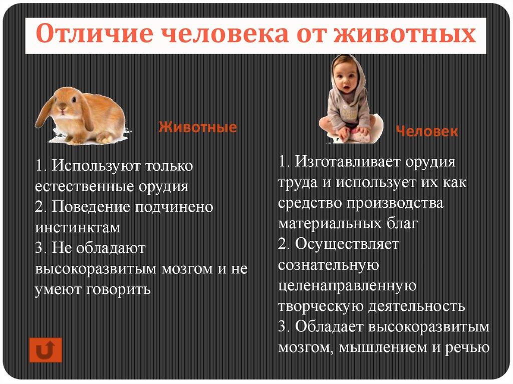 Отличия человека от животного в картинке
