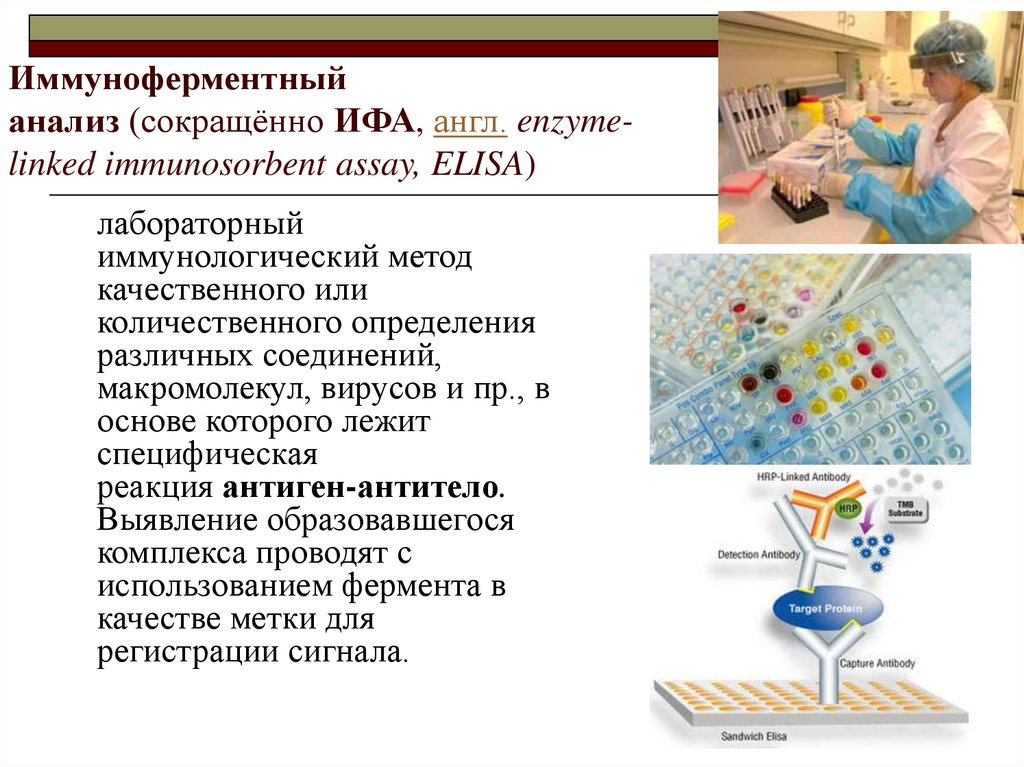Иммуноферментный анализ (сокращённо ИФА, англ. enzyme-linked immunosorbent assay, ELISA)