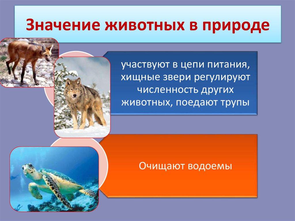 Рассмотри рисунки расскажи о роли животных в природе