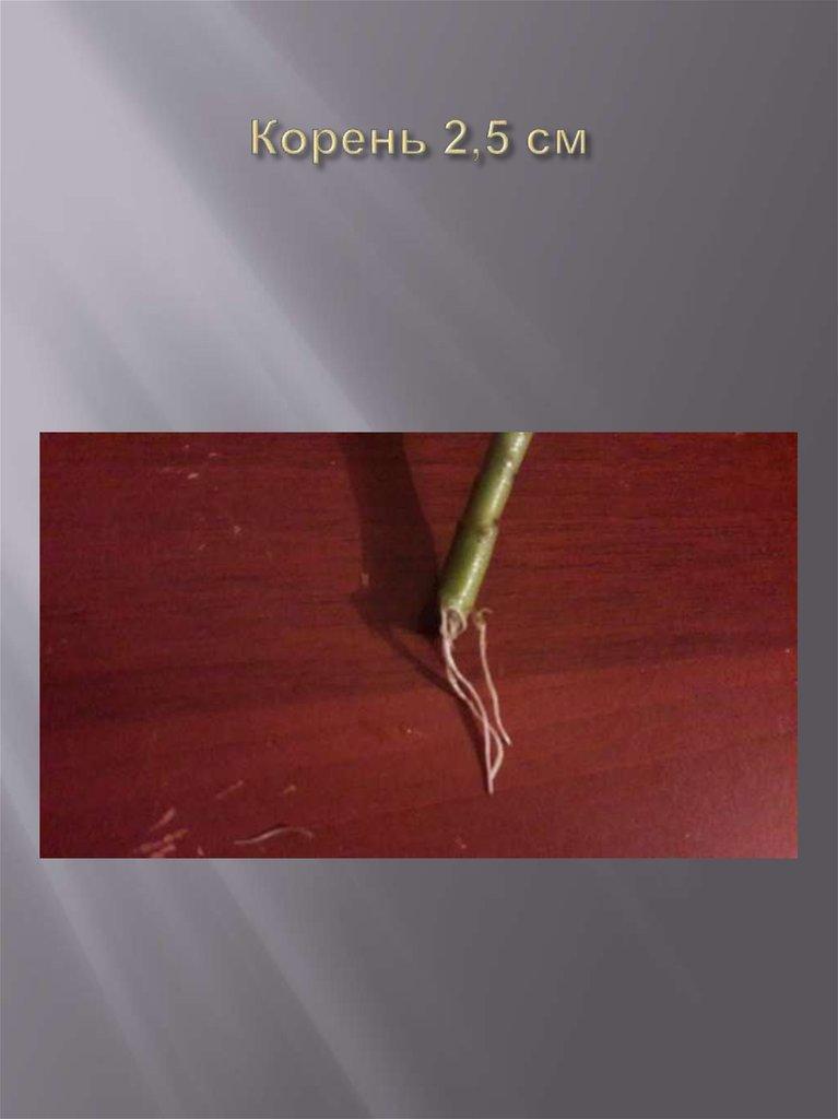 лабораторная работа по биологии 6 класс черенкование комнатных растений