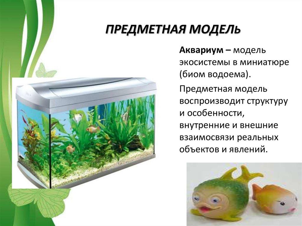 Практическая работа 2 аквариум как девушка модель экосистемы 11 работа в екатеринбурге с 17 лет девушке