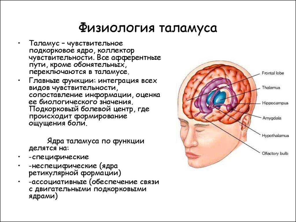 Нейроны, способные выполнять полисенсорные функции.