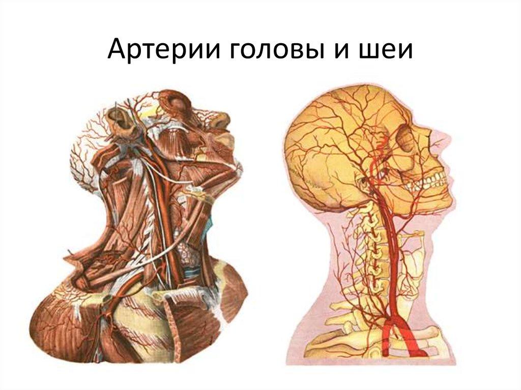 Болезни сосудов головы и шеи