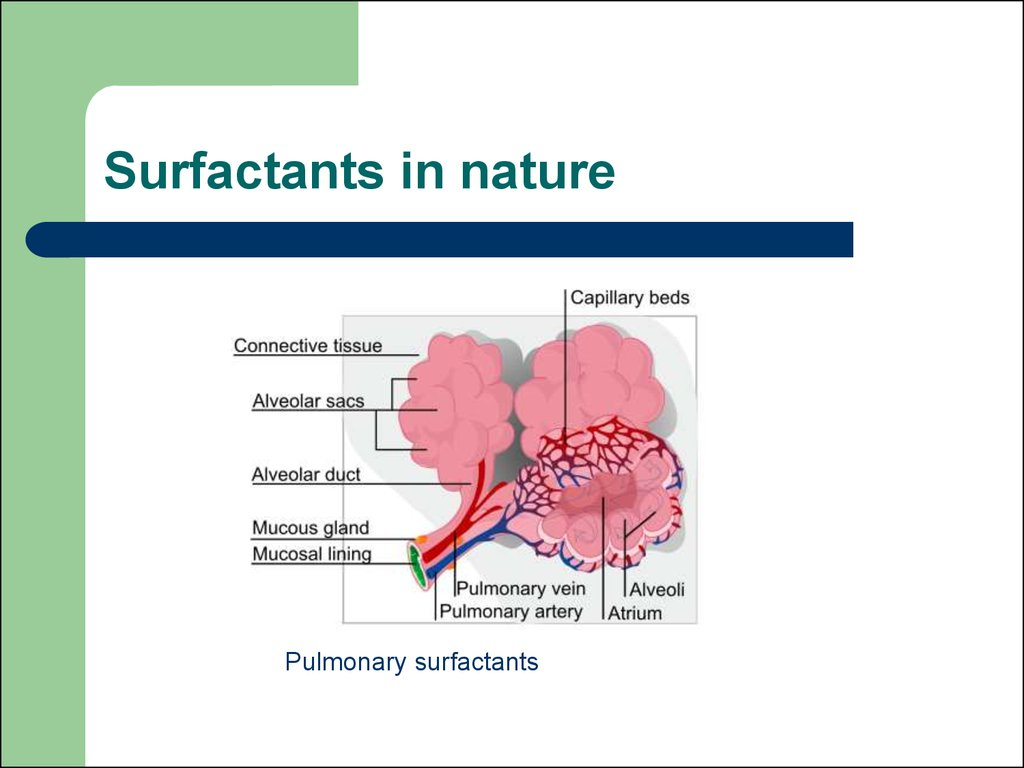 Surfactants in nature