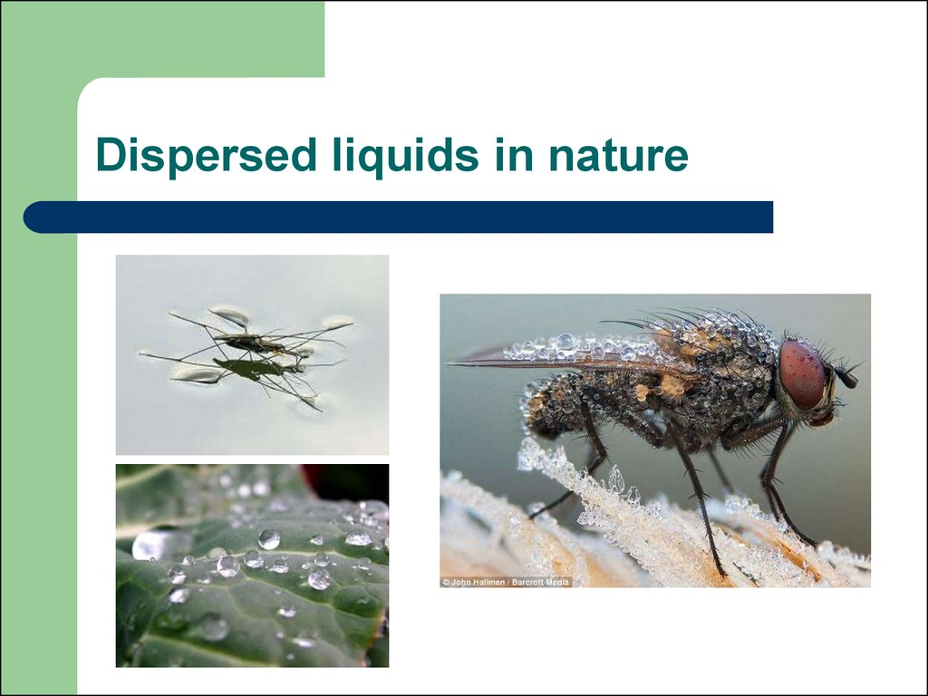 Dispersed liquids in nature
