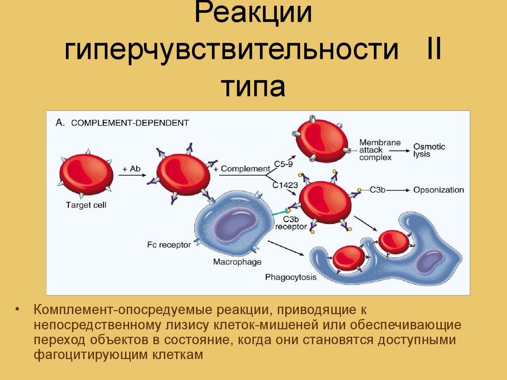 аллергия типы реакций