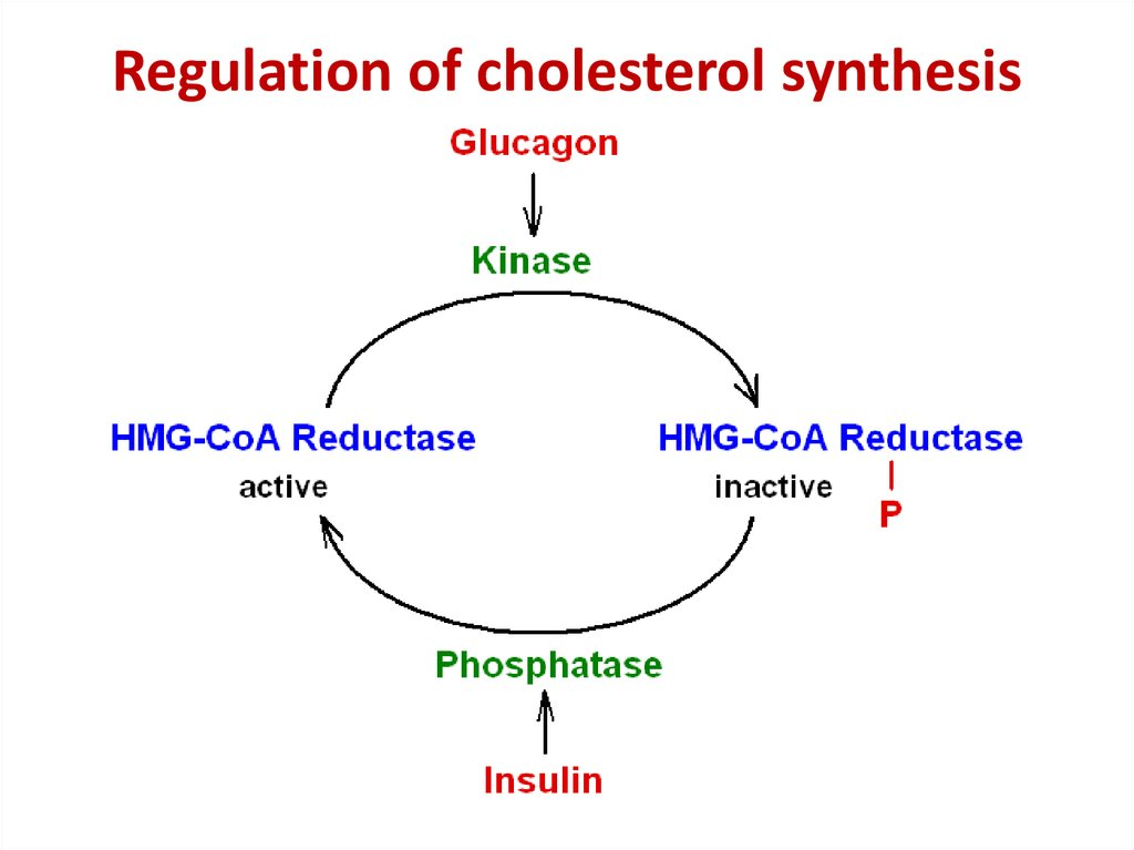 Regulation of cholesterol synthesis