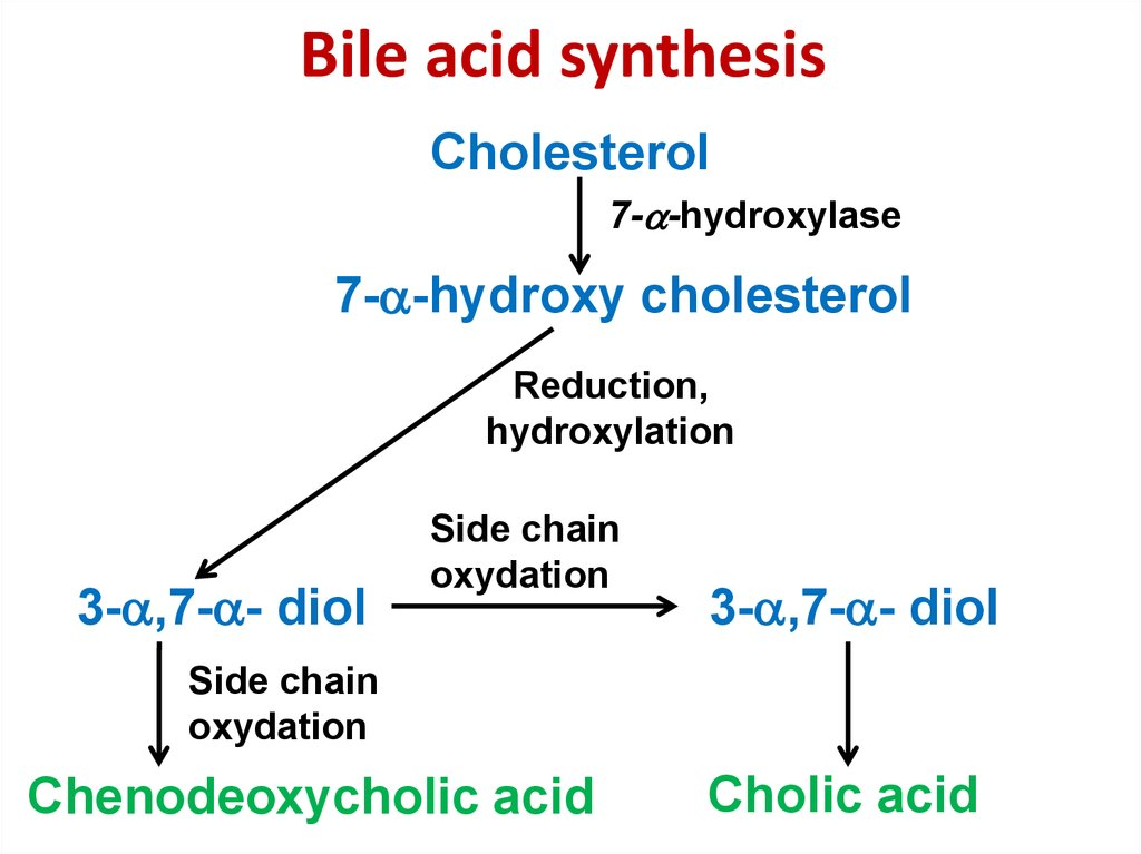 Bile acid synthesis