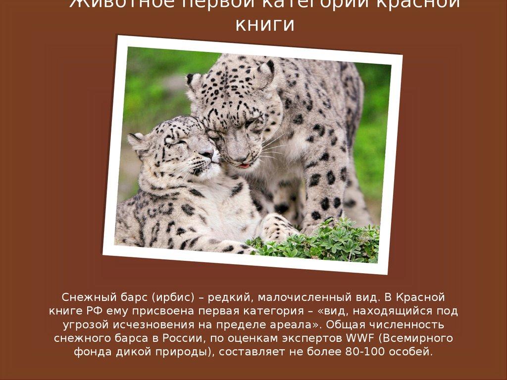 Животные красной книги их названия и картинки