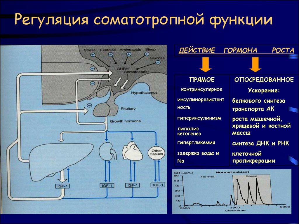 Москве действие гормона роста на заживление учету поставки материалов