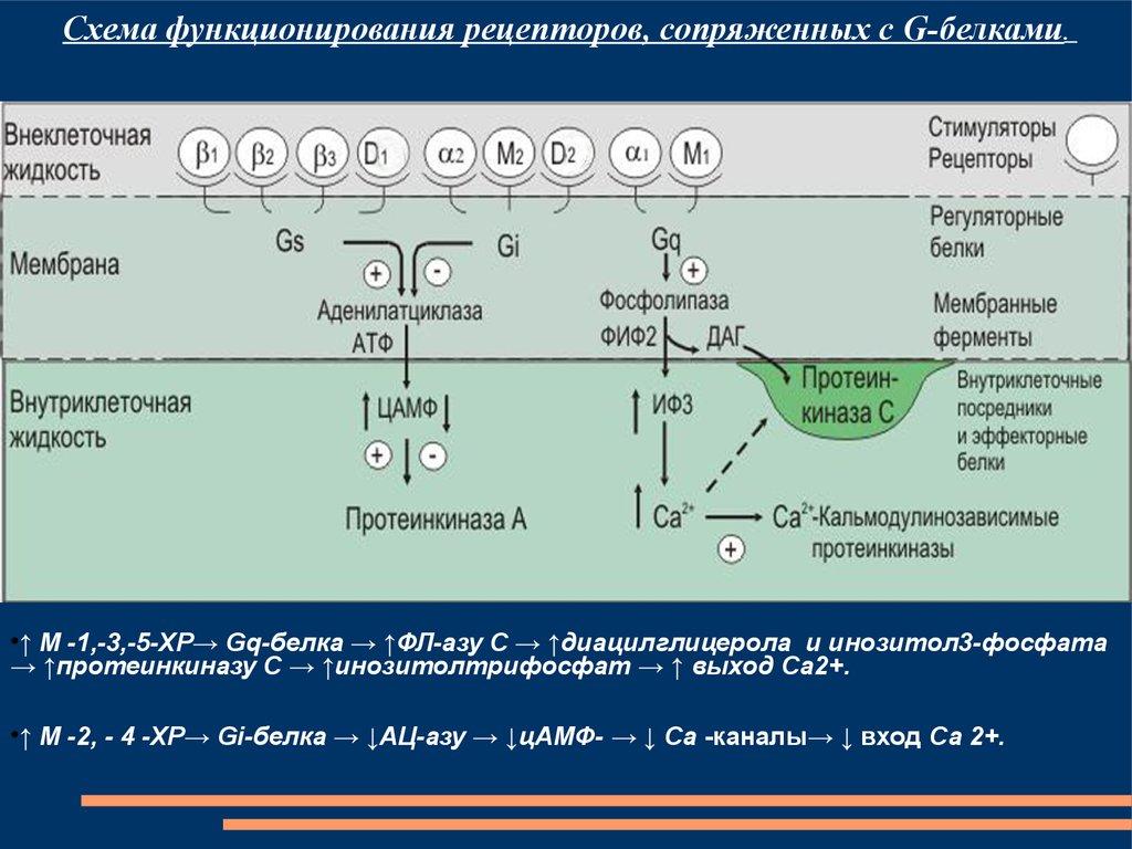 download level 3 practice exams for the 2010 cfa exam volume 1