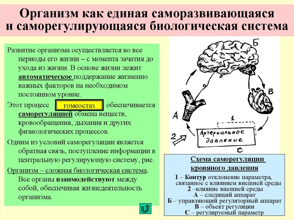 Схема организма человека как единой целостной системы