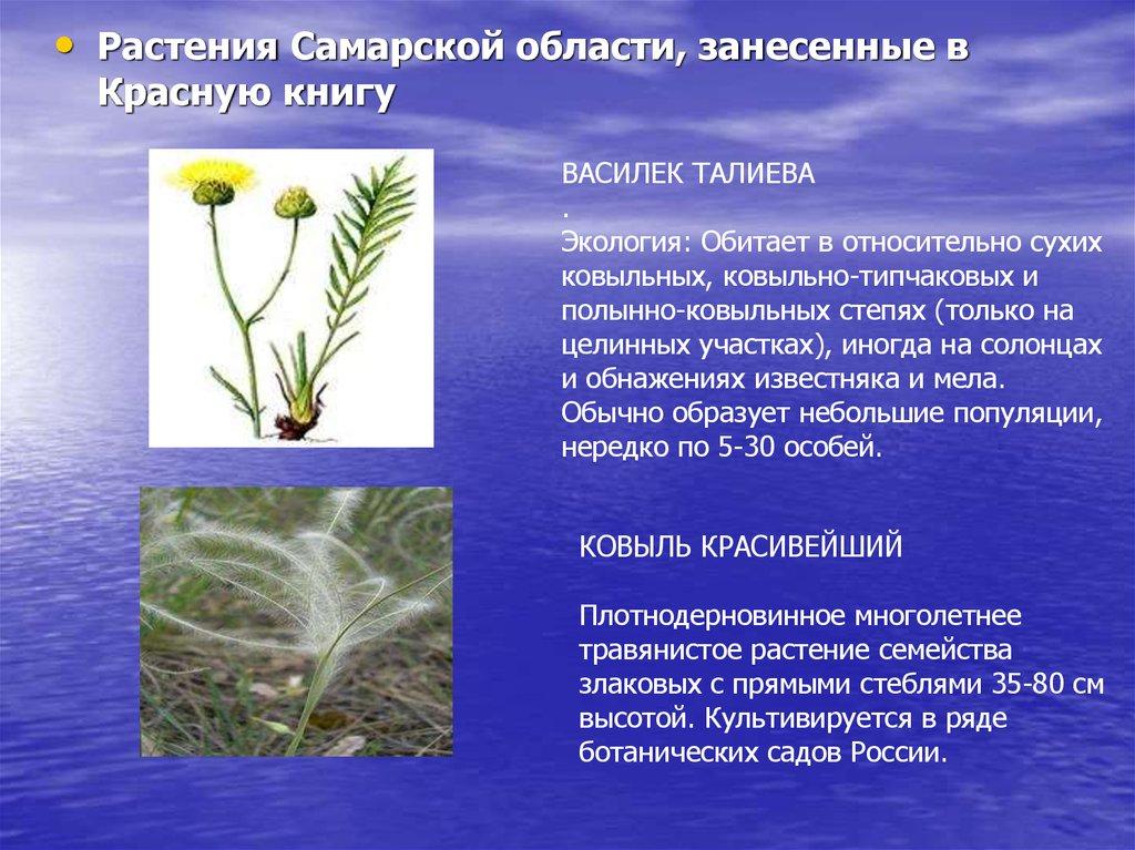 Растительность самарской области реферат 5738