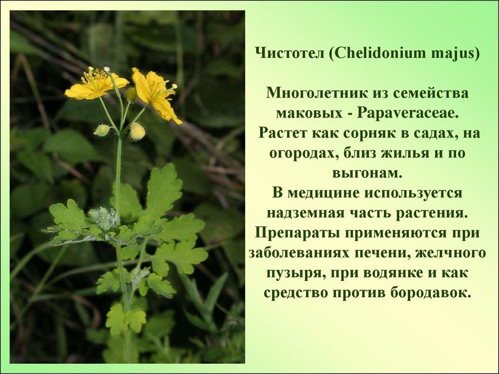 Реферат лекарственные растения в гинекологии 1386